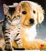 cat-and-dog1.jpg