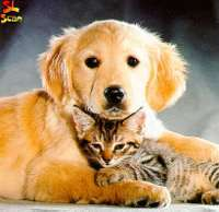 cat-and-dog2.jpg